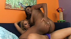 Busty black bitches get naked and use the strap-on for hot lesbian fucks