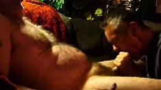 Giving daddy a Blowjob.