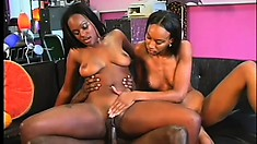 Two caramel hotties take turns wildly fucking a massive black prick